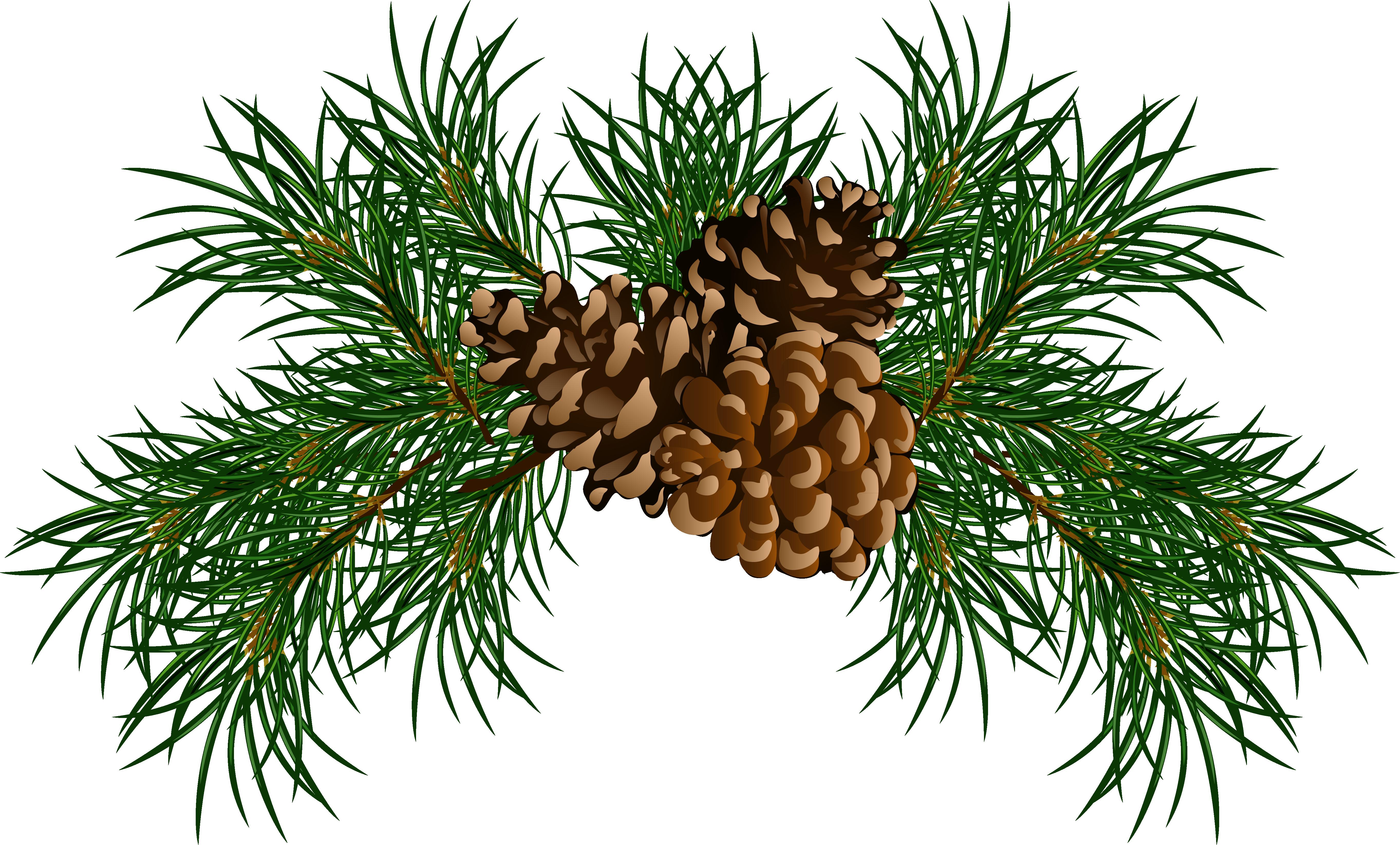 ... pine cone clip art. b4088301b12bef873b3156f5cca5a2 .