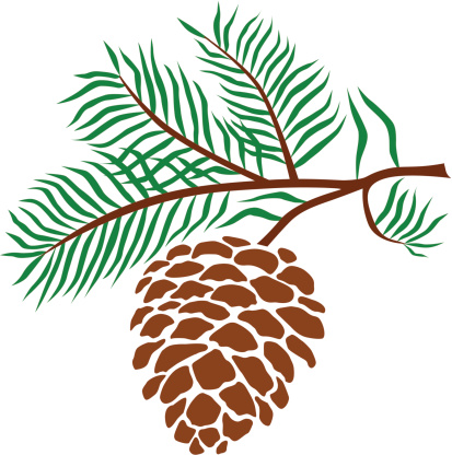 pine cone vector art .