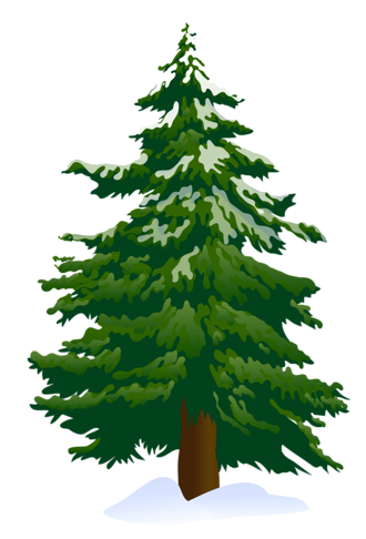 Pine Trees Pictures