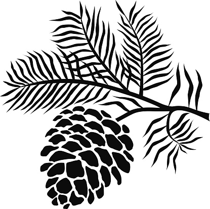 pinecone on branch in black .