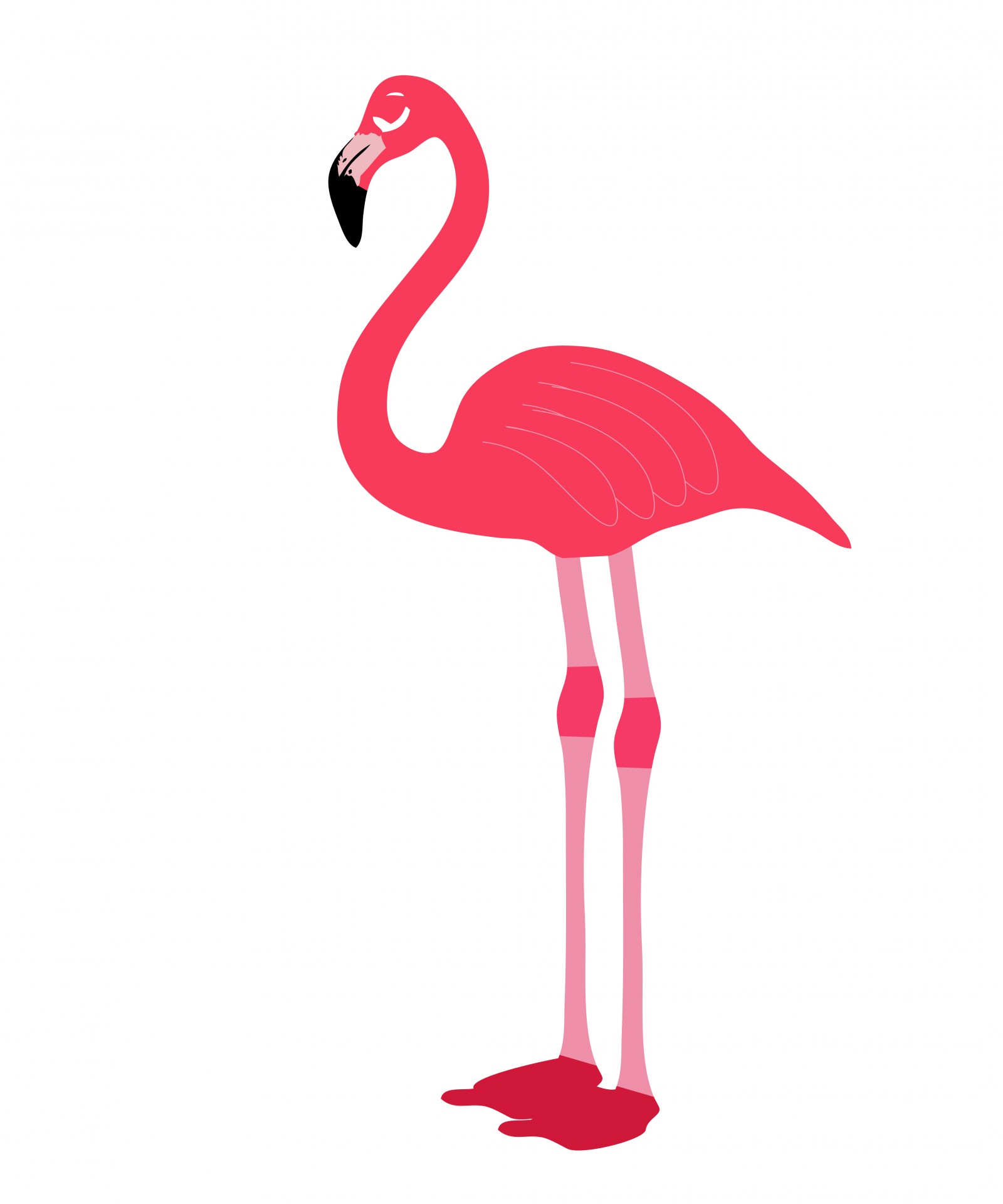 Pink Flamingo Bird Clipart