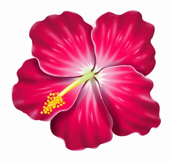 pink hibiscus clip art .