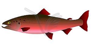 Pink salmon clipart - ClipartFest