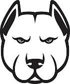 Pit-Bull; pit bull head (pit bull terrier)