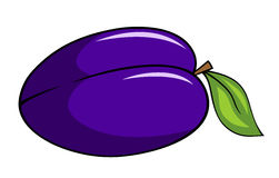 Abstract vector illustration of a plum cartoon style vector illustration