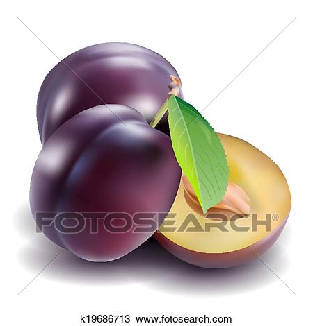 Clipart - Plum. Fotosearch - Search Clip Art, Illustration Murals, Drawings  and Vector