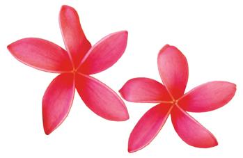 Plumeria Clipart - ClipArt .
