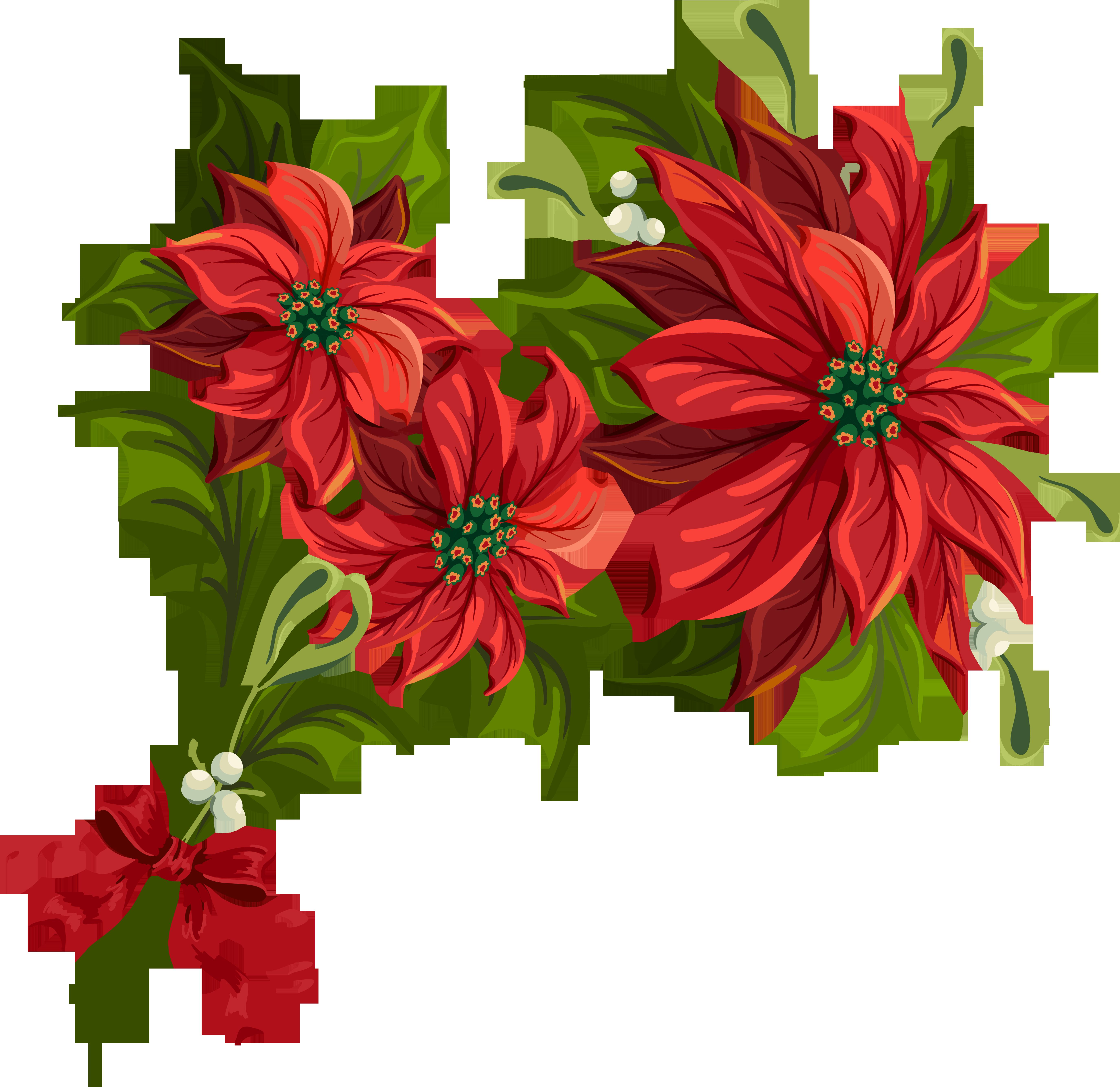 Poinsettia cliparts. Christmas .