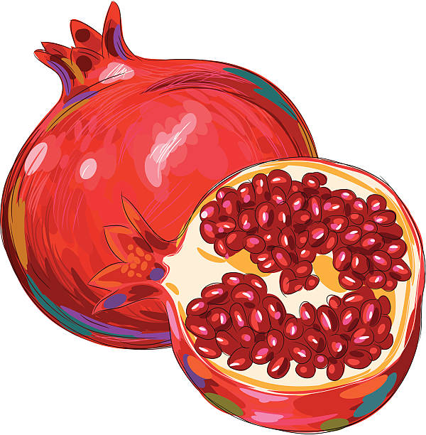 Fresh Pomegranate Isolated On White Vector Art Illustration