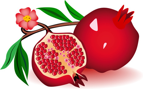 Pomegranate Clipart #9