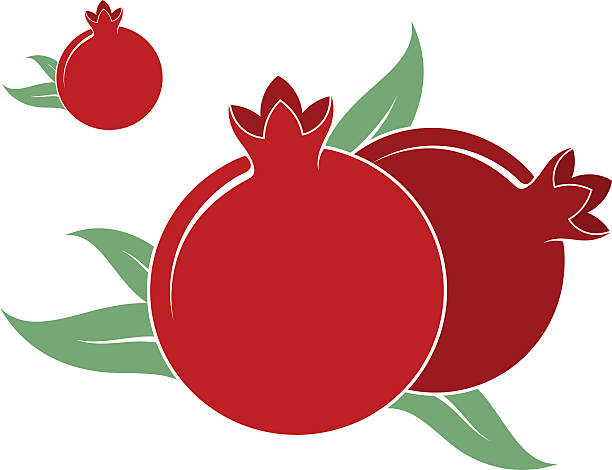Pomegranate Clipart Vector #3