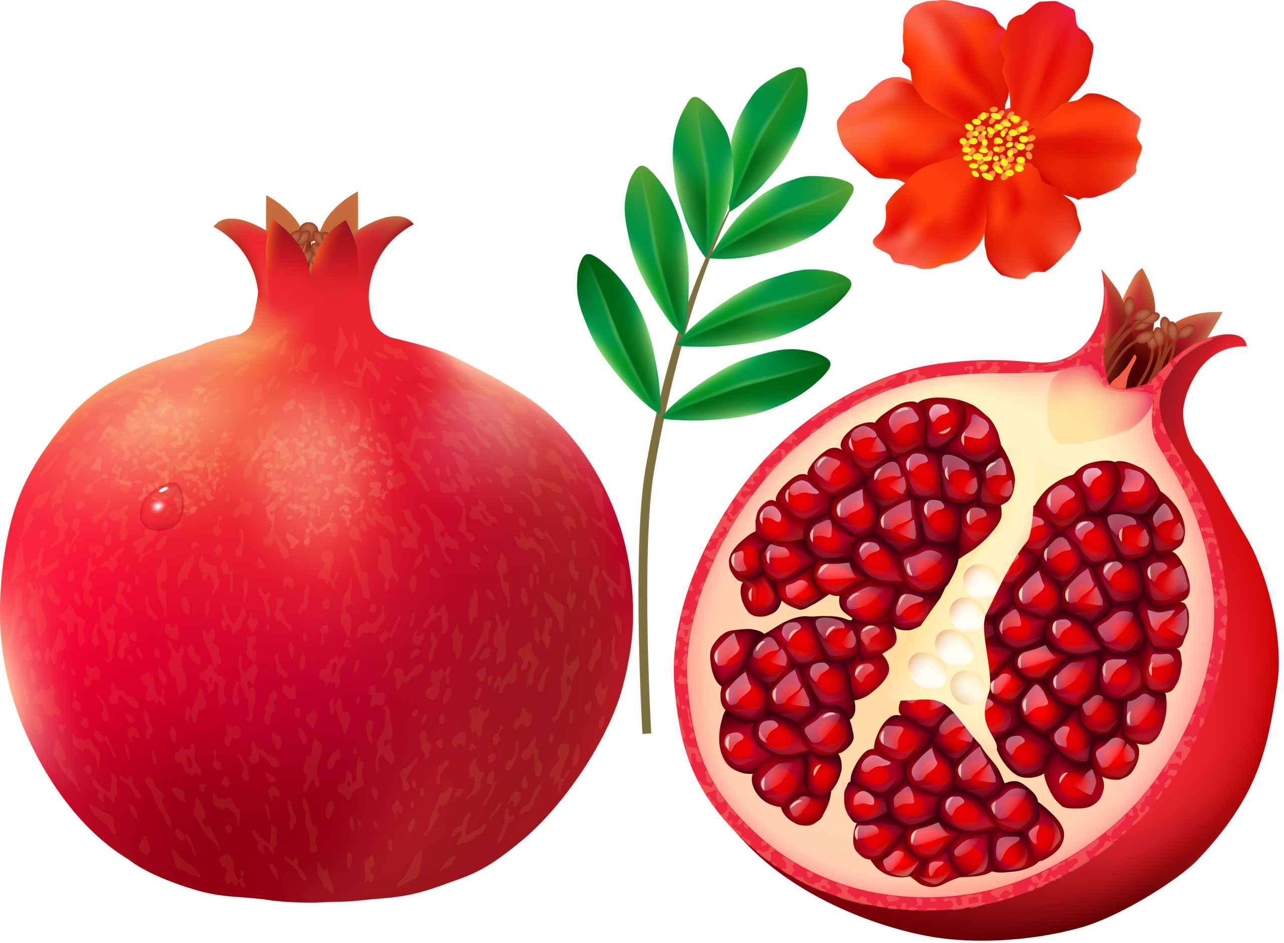 Pomegranate on white backgrou - Pomegranate Clipart