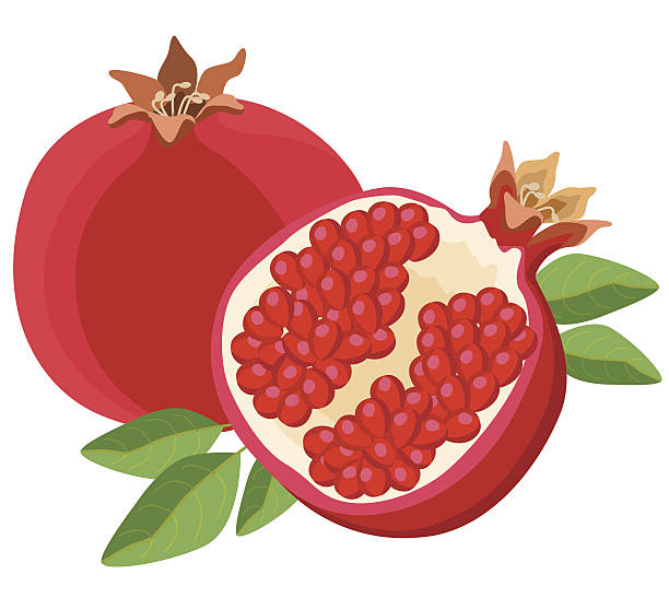pomegranates vector art illustration