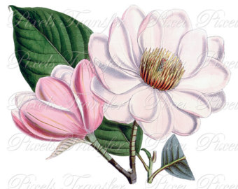 Popular Items For Magnolia Clipart On Etsy