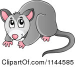Cartoon Of A Cute Australian Possum Royalty Free Vector Clipart
