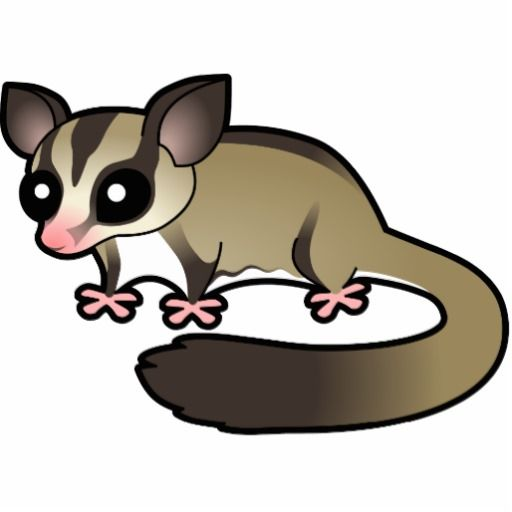 Images about possums on cartoon and clip art