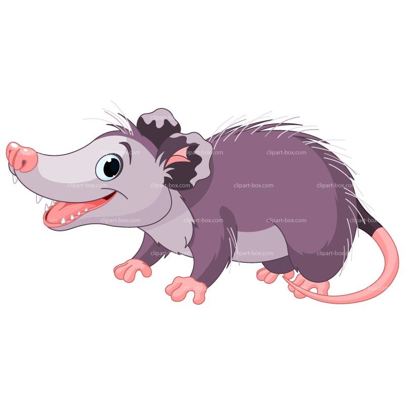 Opossum clip art clipart Possum Clipart