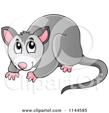 Possum Clipart Clipart