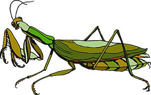 praying mantis clipart #13