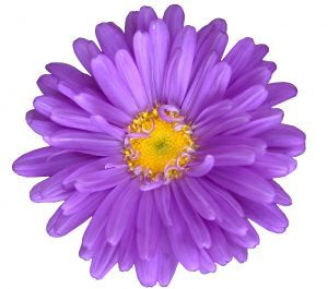 Pretty Purple Flower Clip Art
