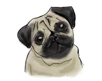 Pug Portrait Drawing Iron On Tran Sfer Image Printable Graphics