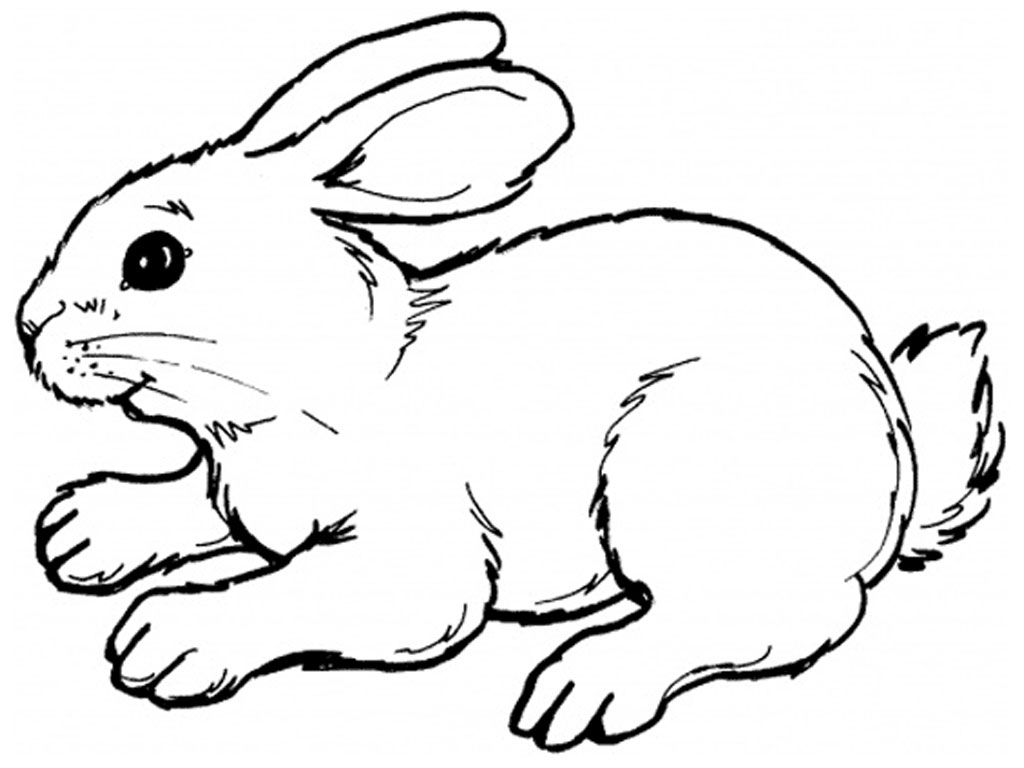 Coloring:Rabbit Clipart Black