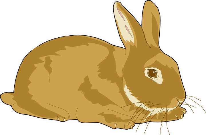 Rabbit clipart clipart cliparts for you 3