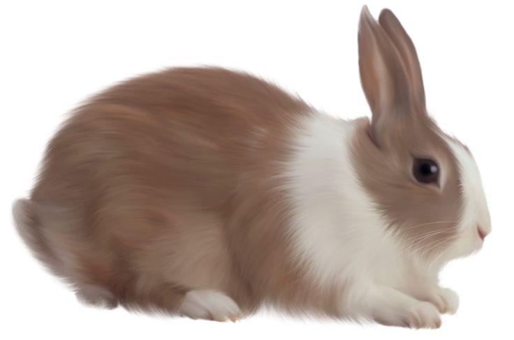 Rabbit Clipart 60