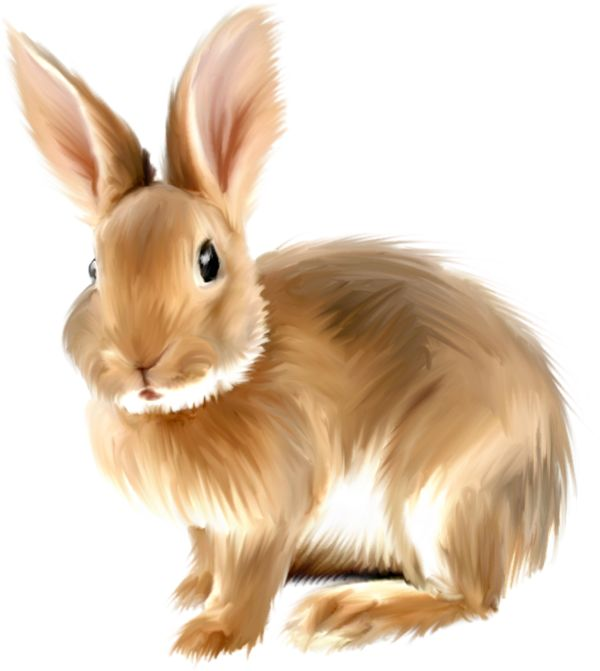 rabbit clipart bunny rabbit clipart free graphics of rabbits and bunnies  animations