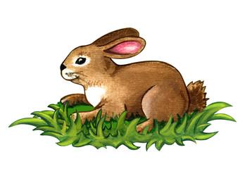 Rabbit clipart grass #9