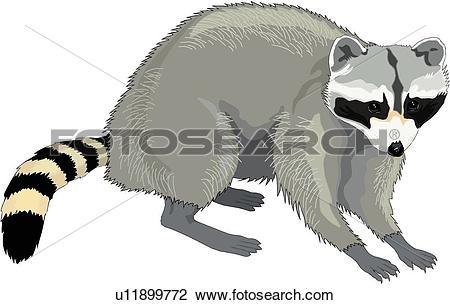 Raccoon. ValueClips Clip Art