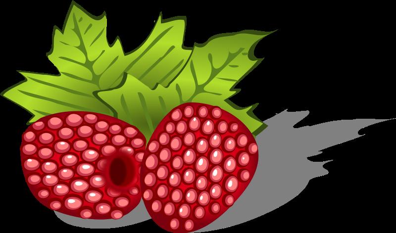 Raspberries Clipart-Clipartlook.com-800