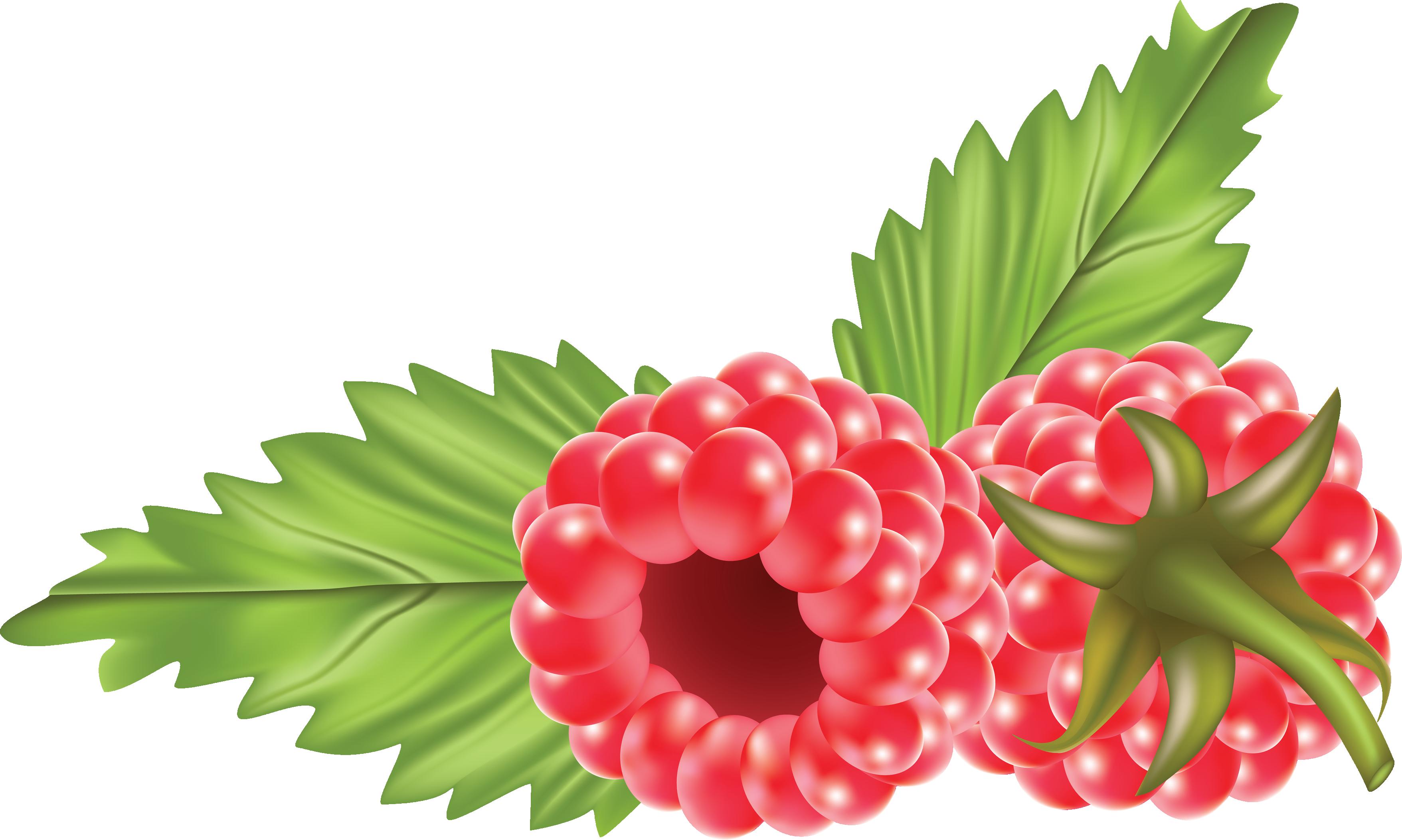 Raspberry Clipart-hdclipartal - Raspberry Clipart