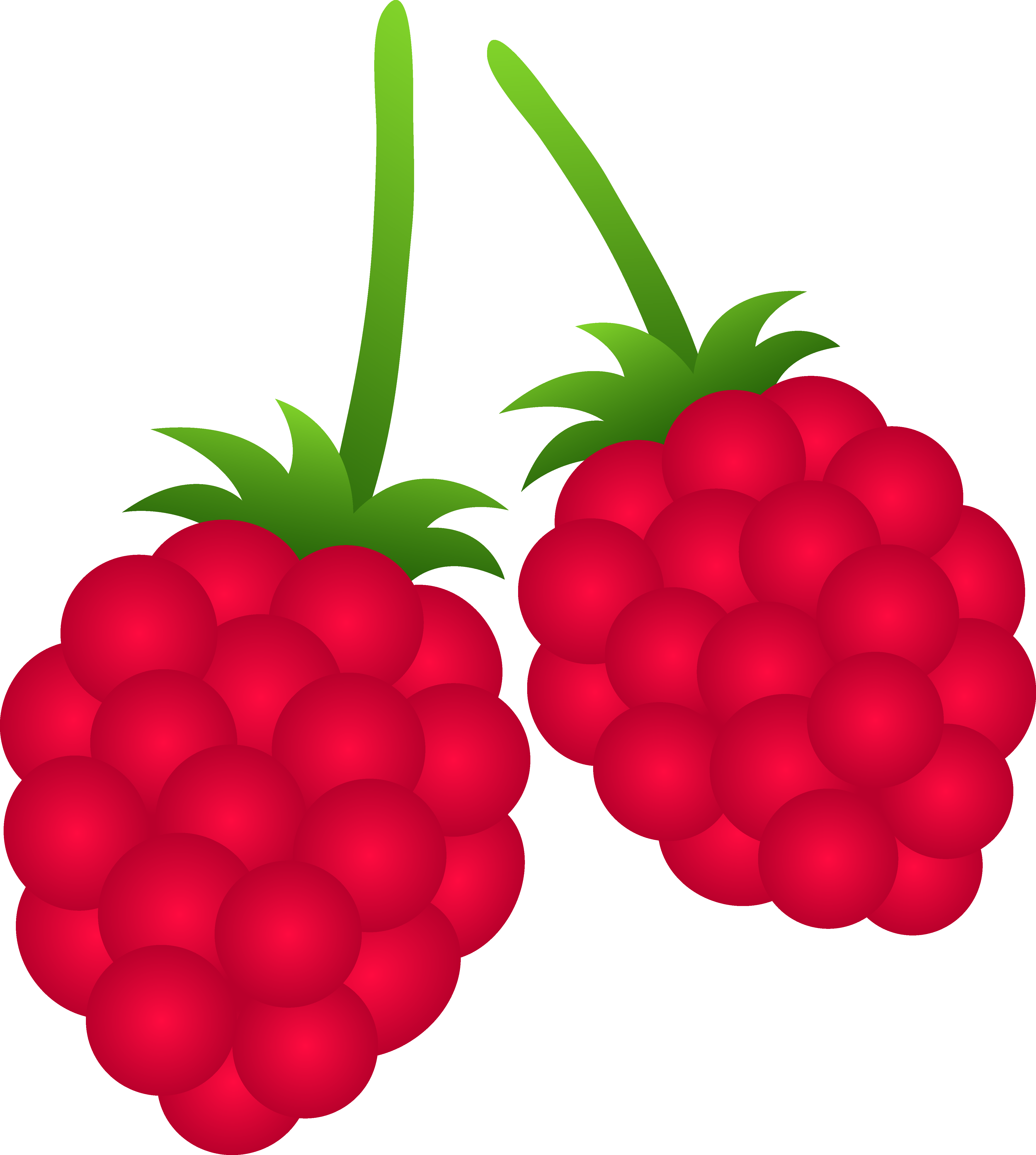 Raspberry Clipart-Clipartlook.com-4571