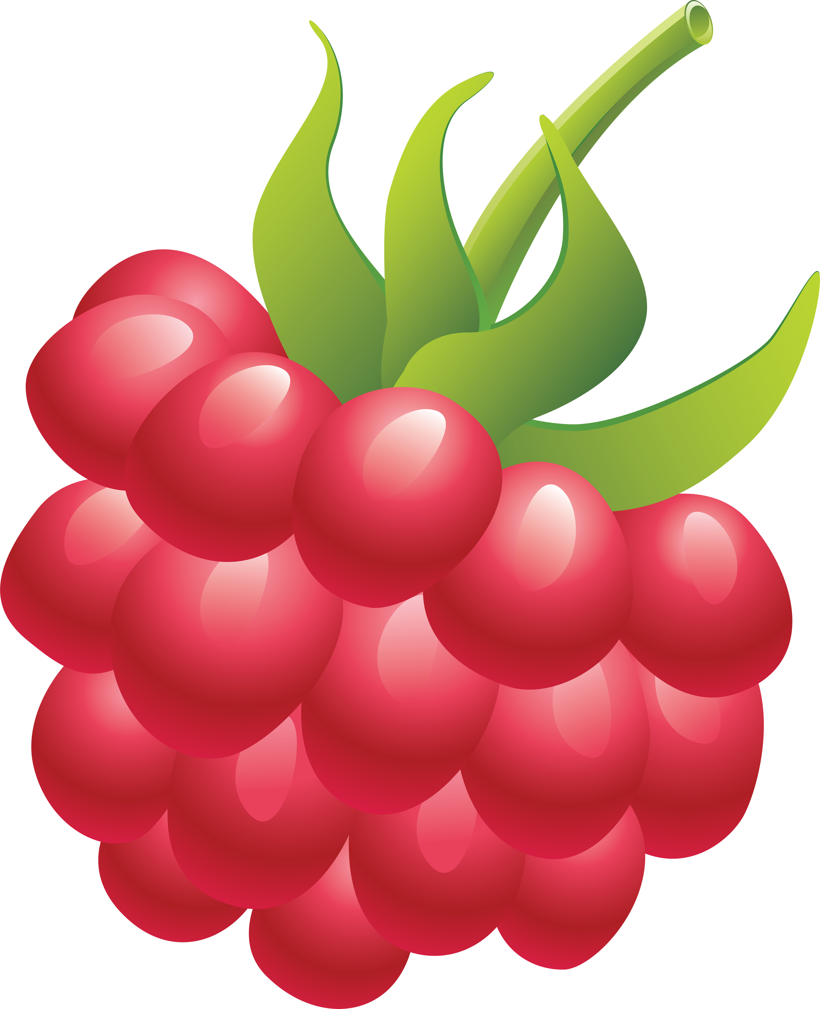 Raspberry clipart red fruit #8