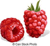 Stock Illustrationby EvgeniiaHulinska6/1,008 raspberry isolated
