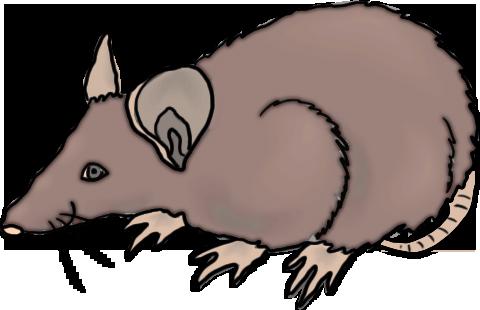 clipart rat rat clip art free - Rat Clipart