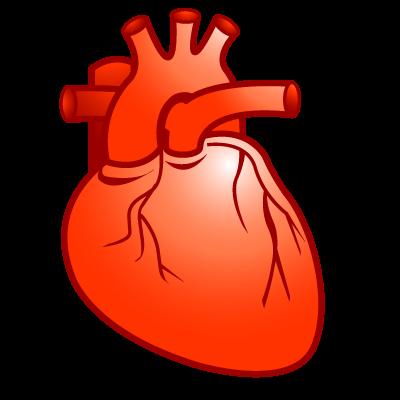Heart cardiology
