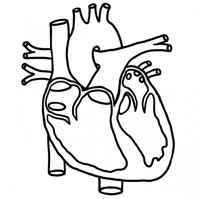Real Heart Clipart #13463