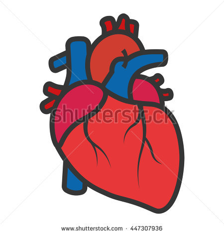 real heart clipart organs clipart real heart pencil and in color organs  clipart free clip art
