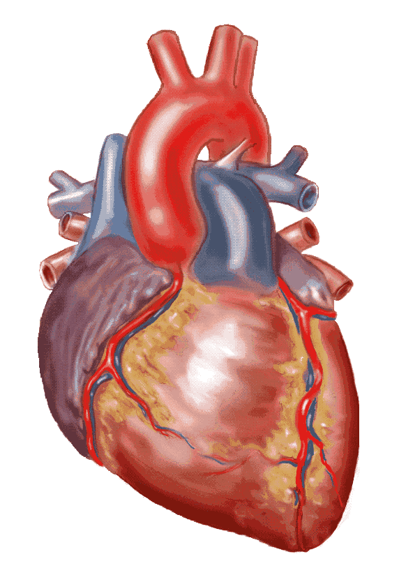 Real Heart Drawing | Clipart library - Free Clipart Images