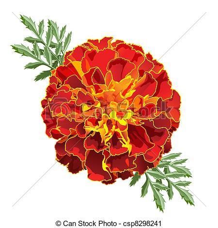 ... Red Marigold (Tagetes) - Red marigold flower (Tagetes.