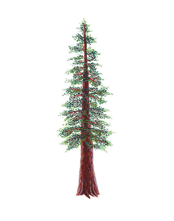 Redwood Tree Art Print - 11 x 14 inches - courtney oquist etsy