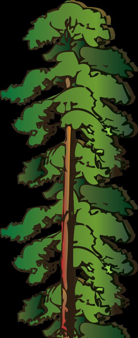 Redwood Tree Clipart ...