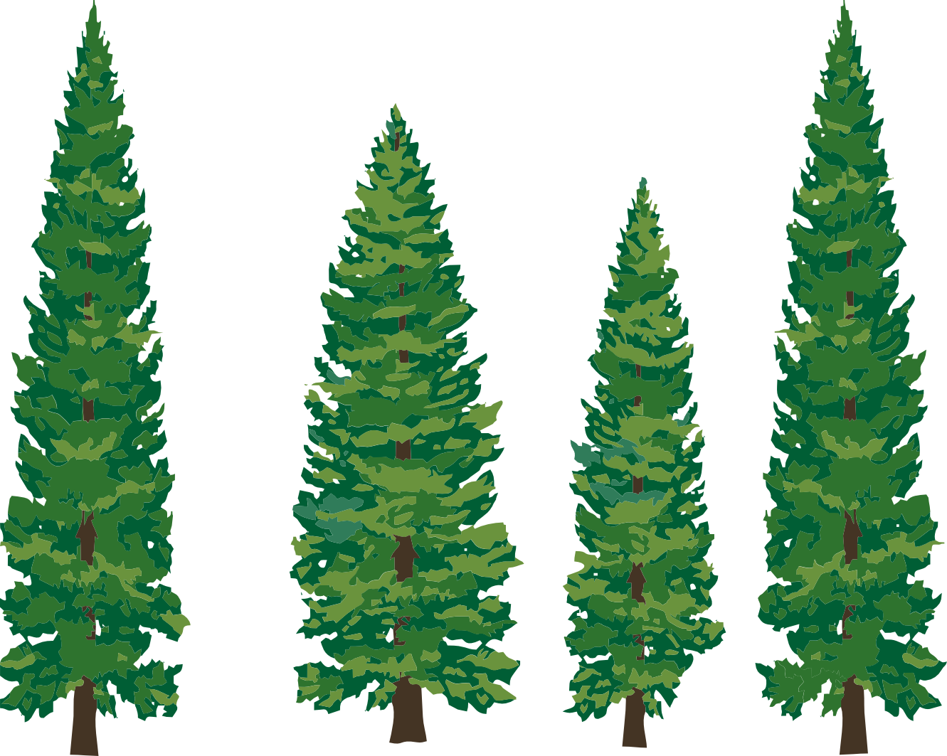 ... Redwood tree with face clipart png ...