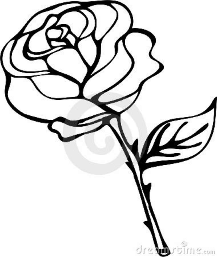 Rose Black And White Outline .