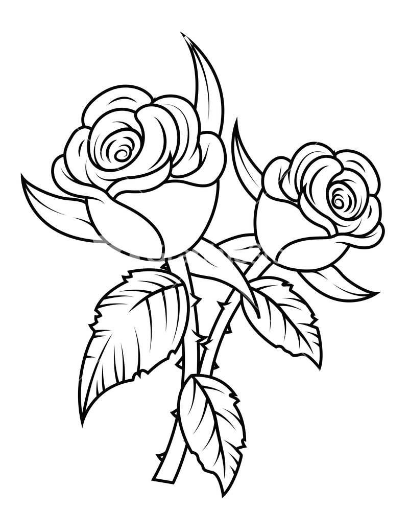 Rose black and white rose flowers clipart black and white