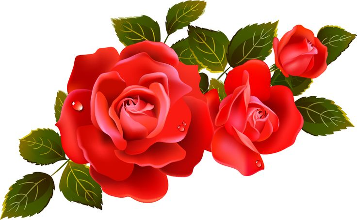Roses Clipart - Roses Clipart