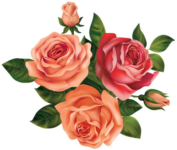Pink Rose clipart orange rose #1