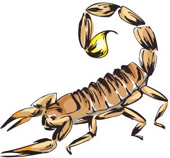Scorpion, Clipart